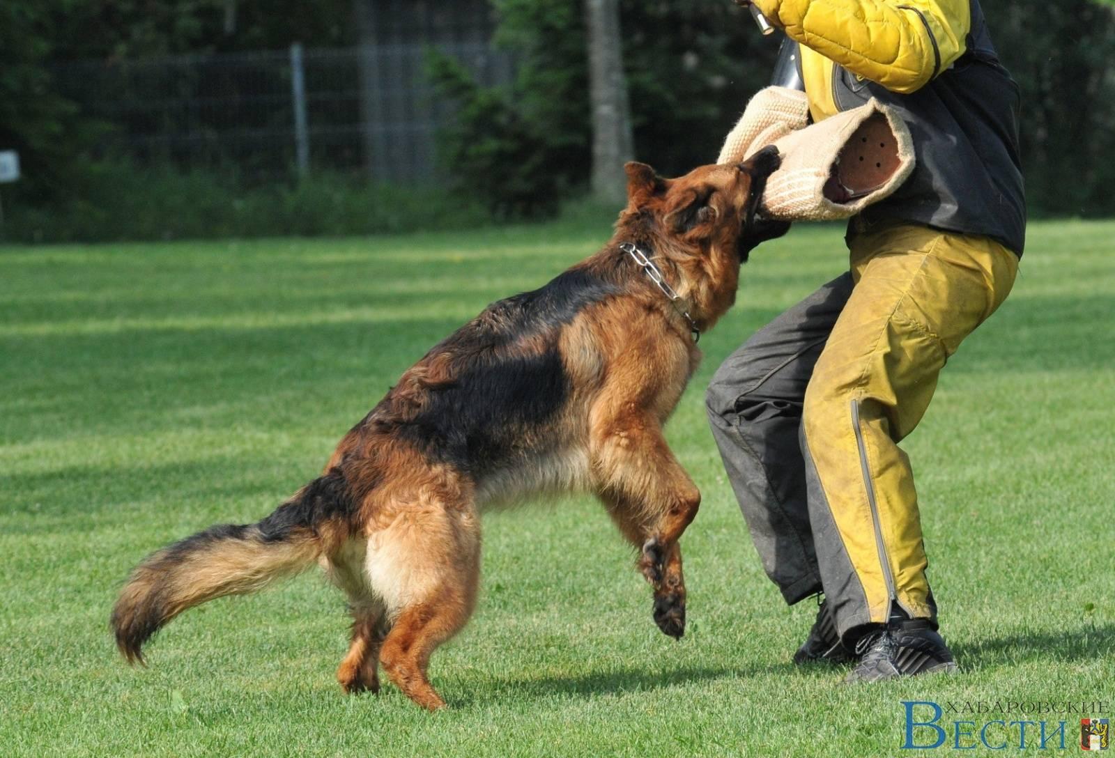 Как научить собаку командам в домашних условиях, каким 48